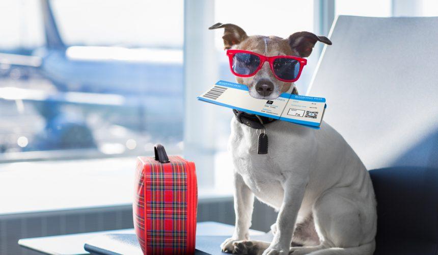 Transporte de animales vivos con garantías hasta el destino
